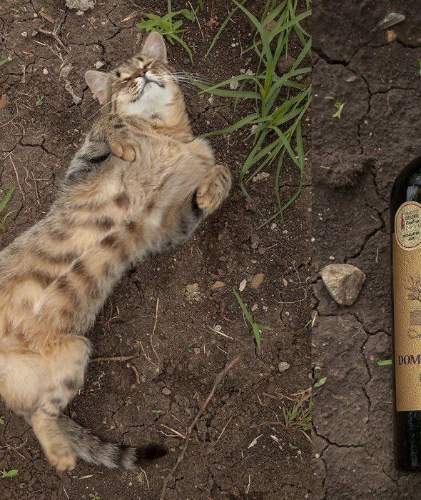 Vin rosu Domeniile Blaga Merlot Cuvee XI2011 Sec Vin de calitate superioara Cumpara vin online Dealu Mare